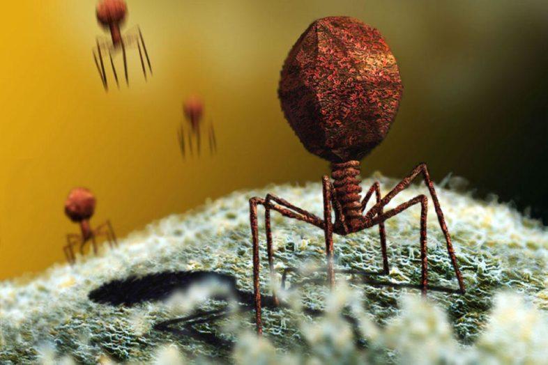 Ο εχθρός των μικροβίων