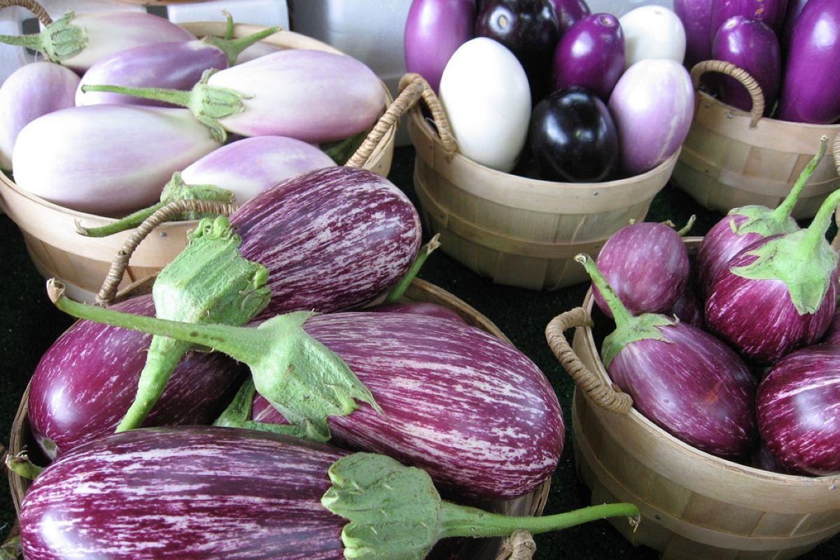 terrapapers.com eggplant (2)
