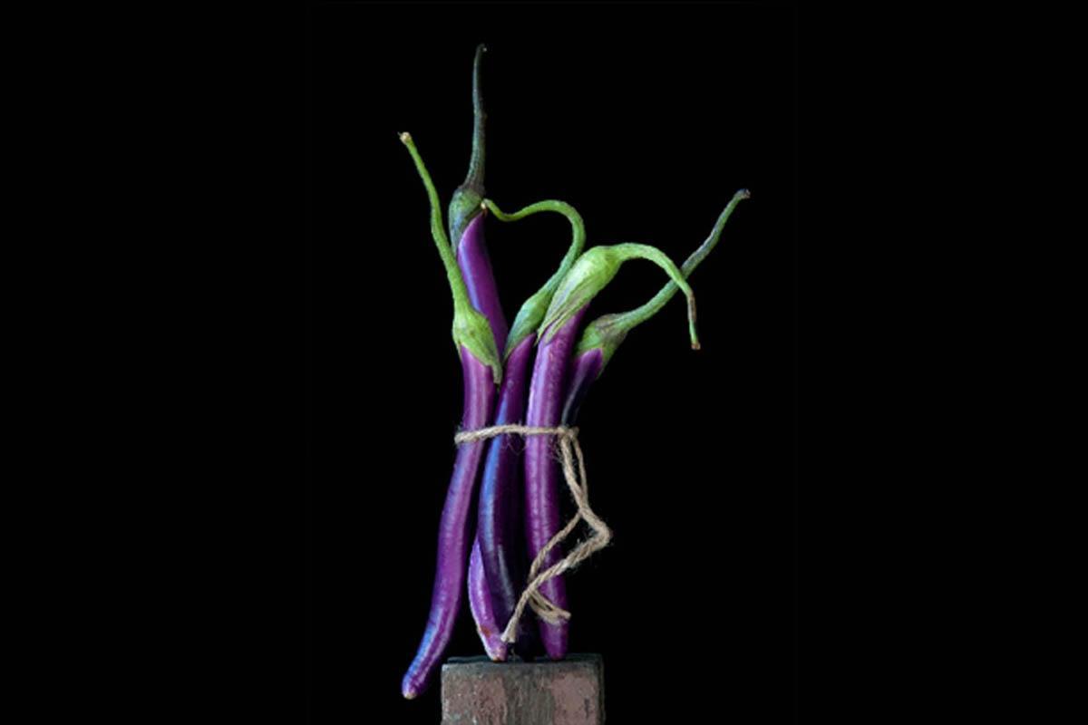 terrapapers.com_eggplant (1)
