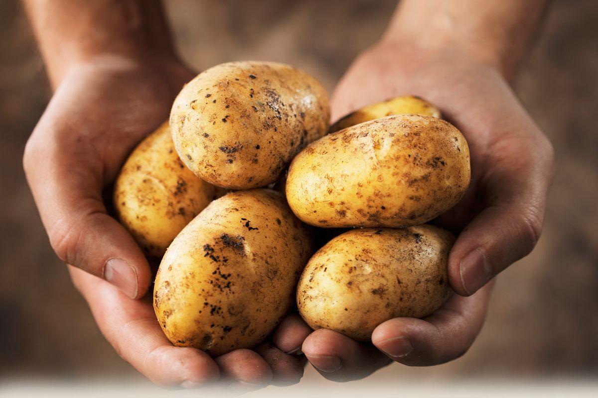terrapapers.com patata to xriso milo tis gis (2)