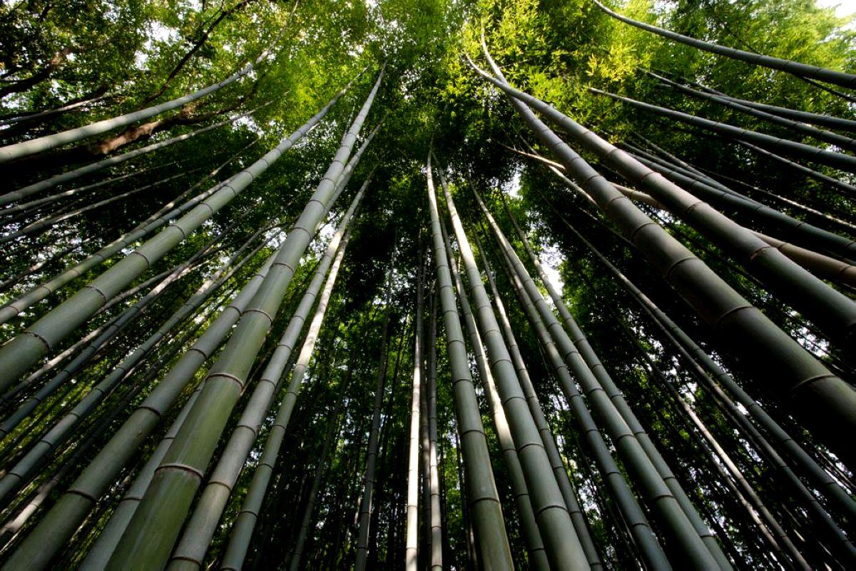 terrapapers.com_Sagano Bamboo Forest (1)