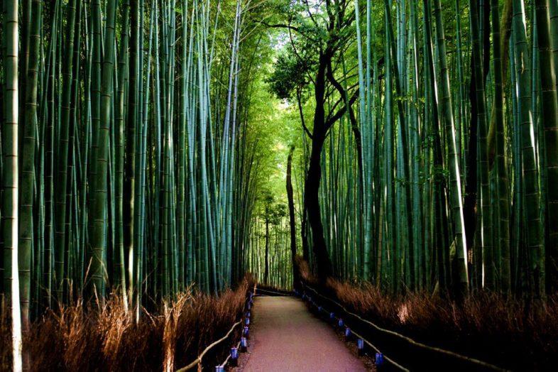 Το δάσος των bamboo