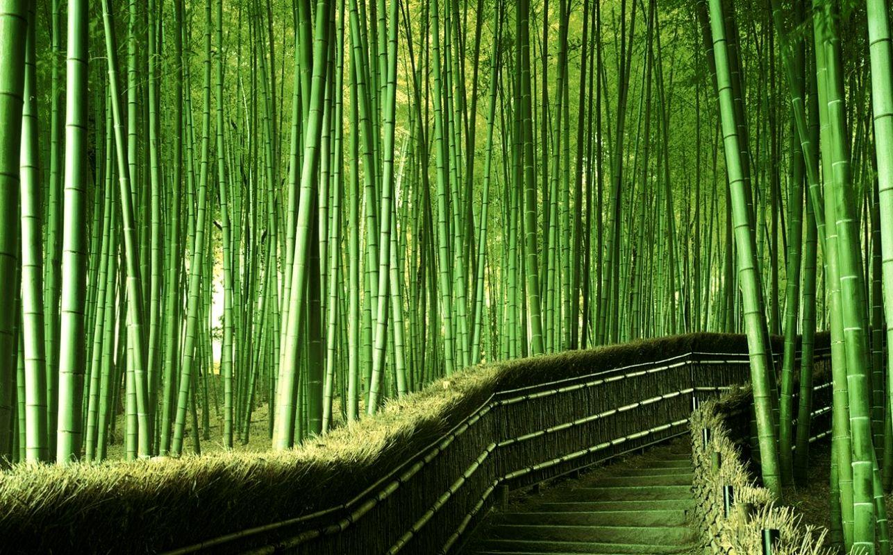 terrapapers.com_Sagano Bamboo Forest (19)