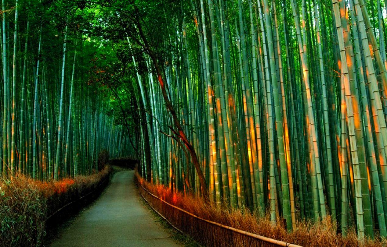 terrapapers.com_Sagano Bamboo Forest (21)
