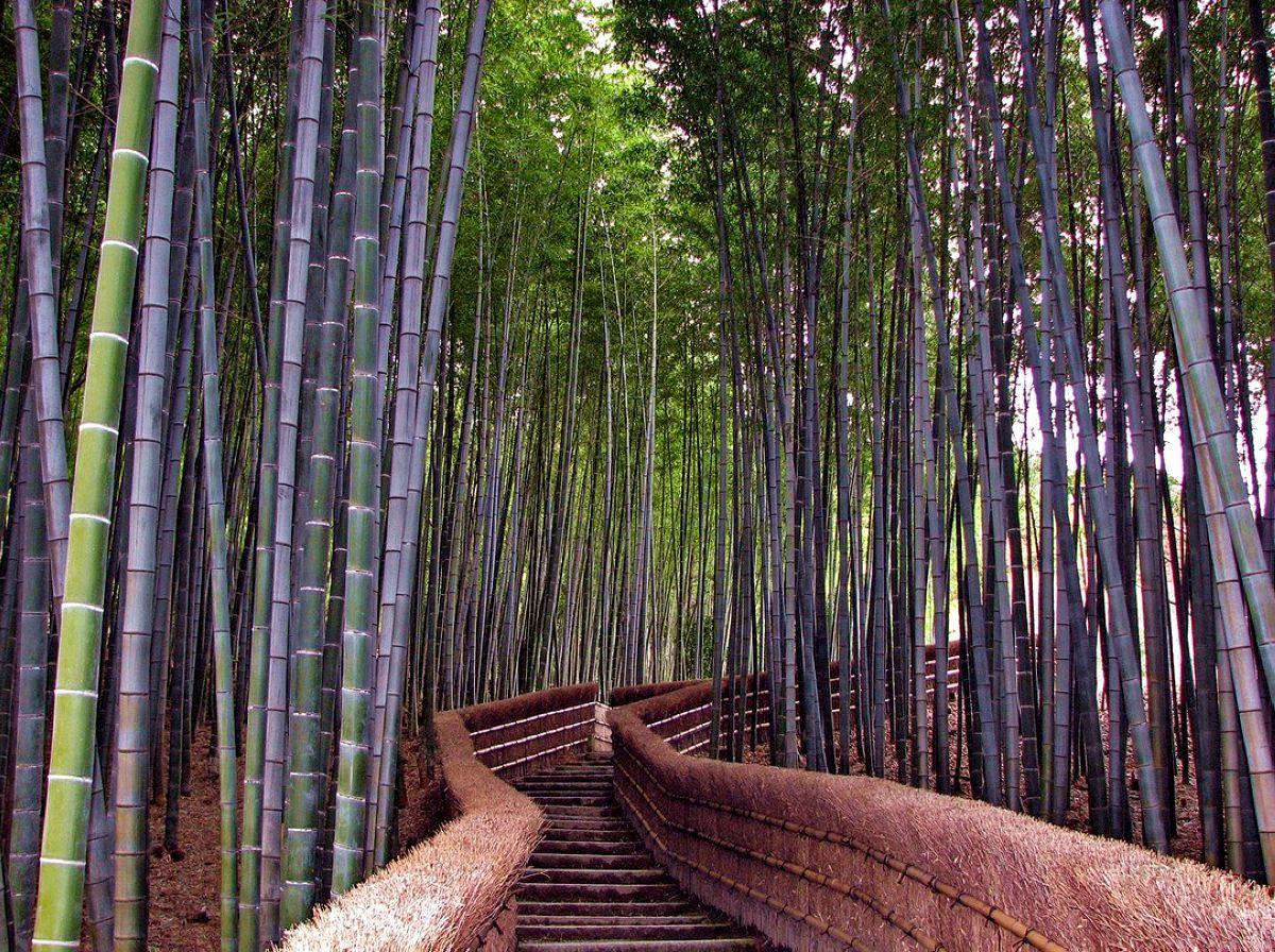 terrapapers.com_Sagano Bamboo Forest (23)