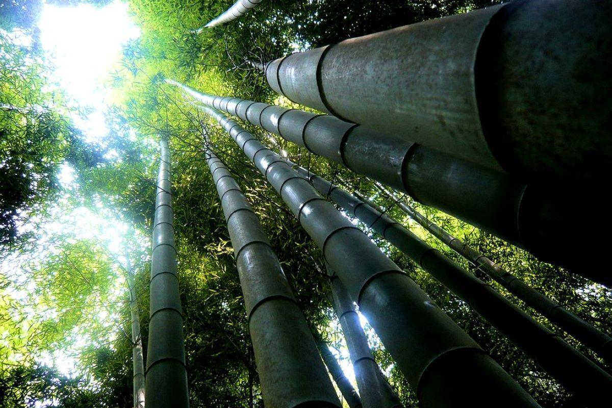 terrapapers.com_Sagano Bamboo Forest (26)