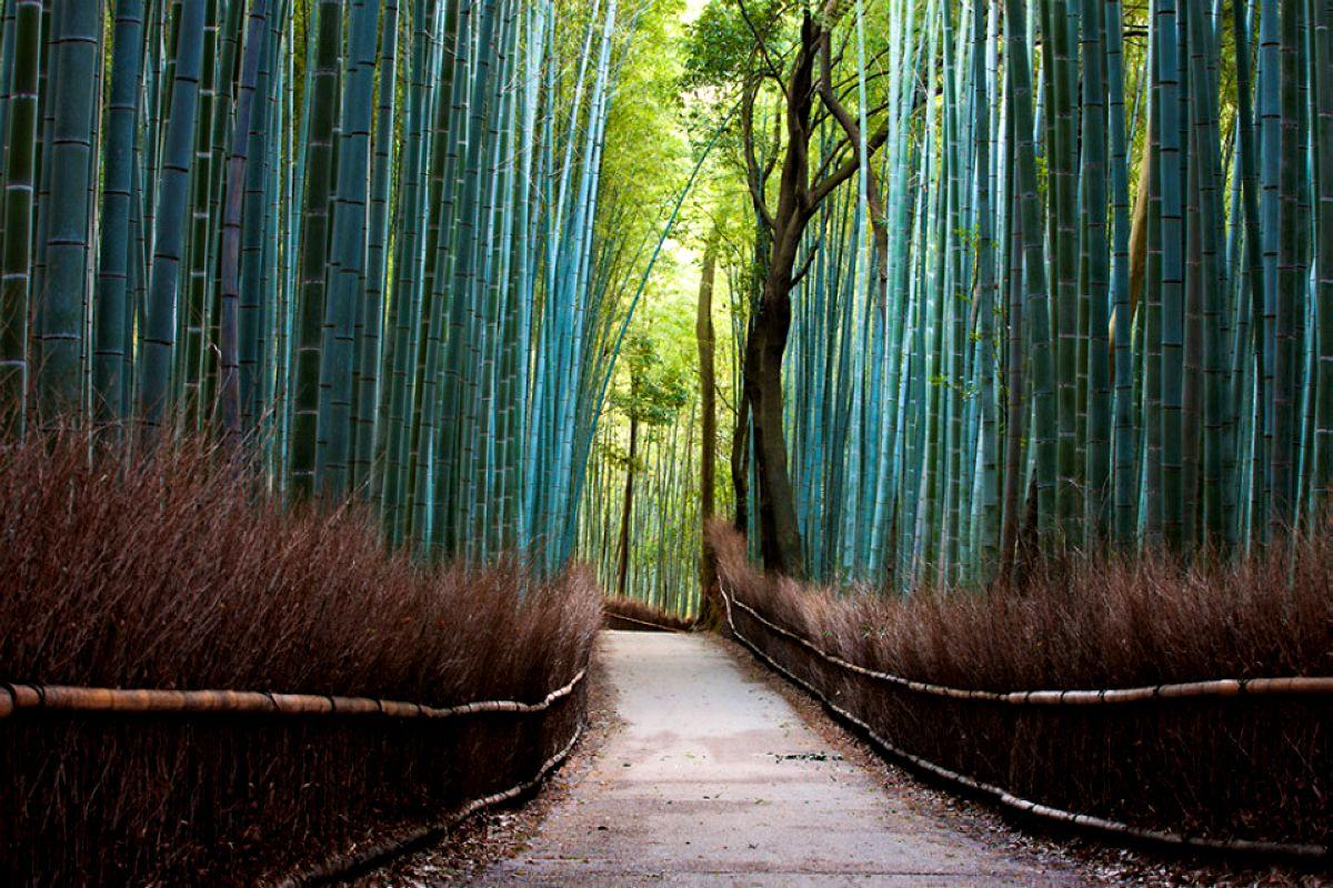 terrapapers.com_Sagano Bamboo Forest (29)