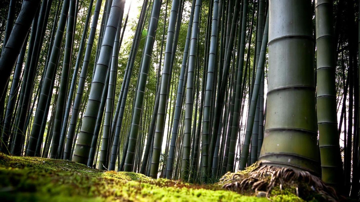 terrapapers.com_Sagano Bamboo Forest (3)