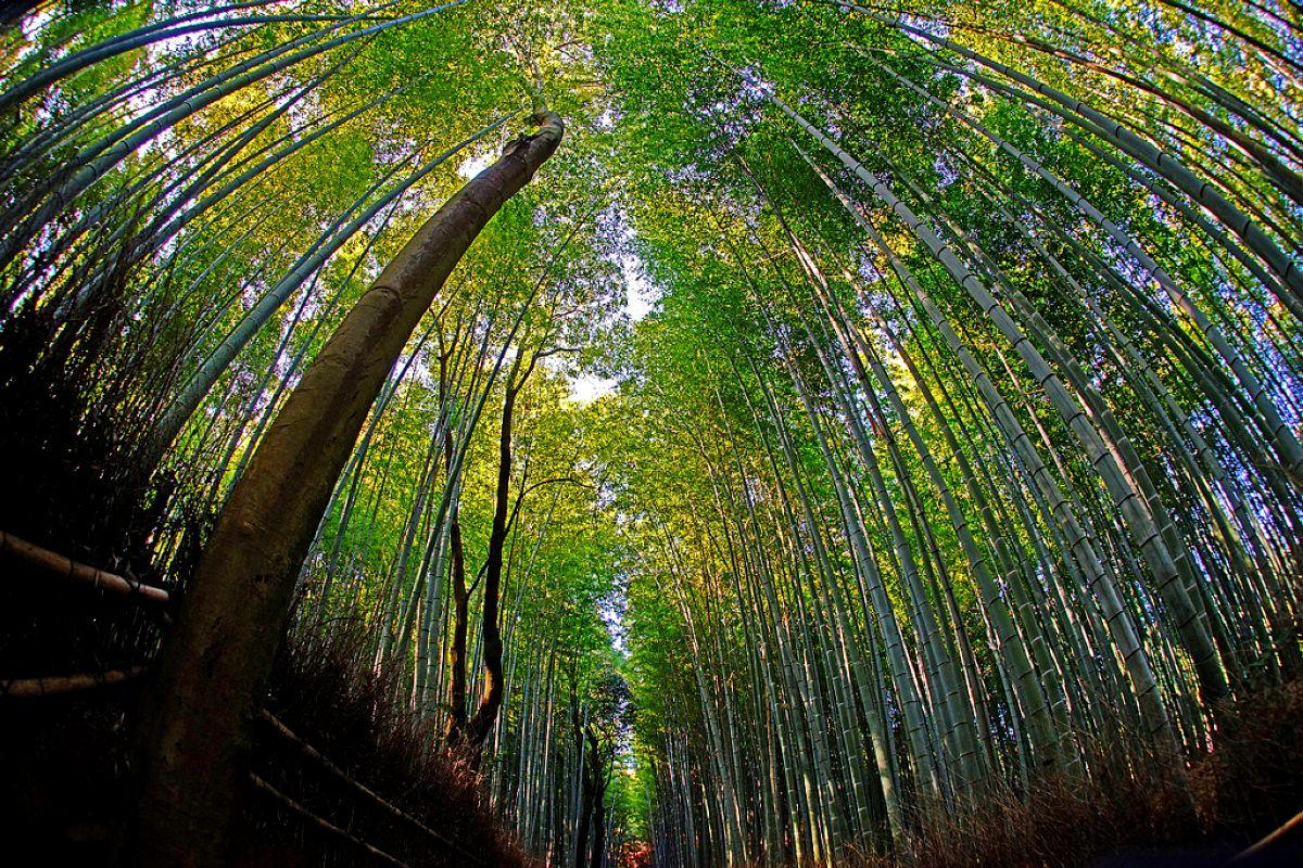 terrapapers.com_Sagano Bamboo Forest (4)