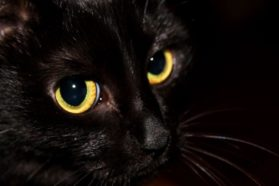 Γιατί οι γάτες είναι ελεεινά υποκείμενα