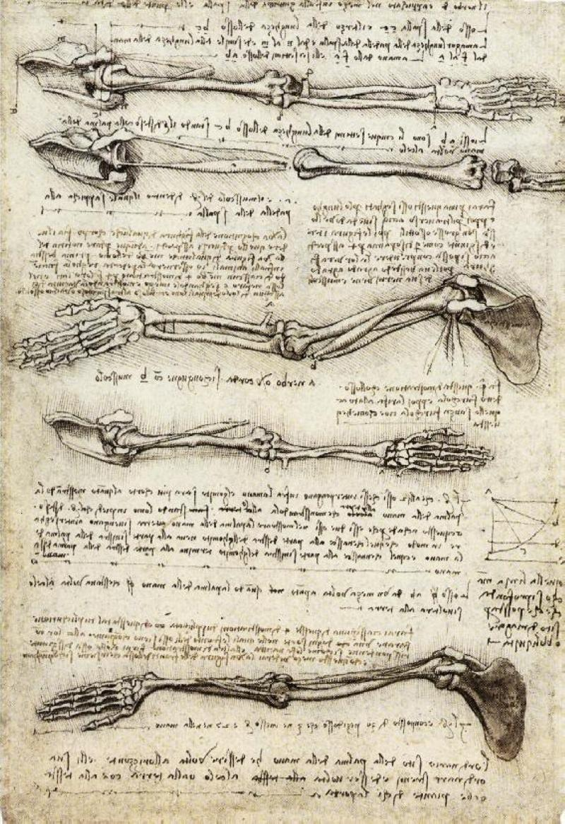 1 Studies_of_the_Arm_showing_the_Movements_made_by_the_Biceps