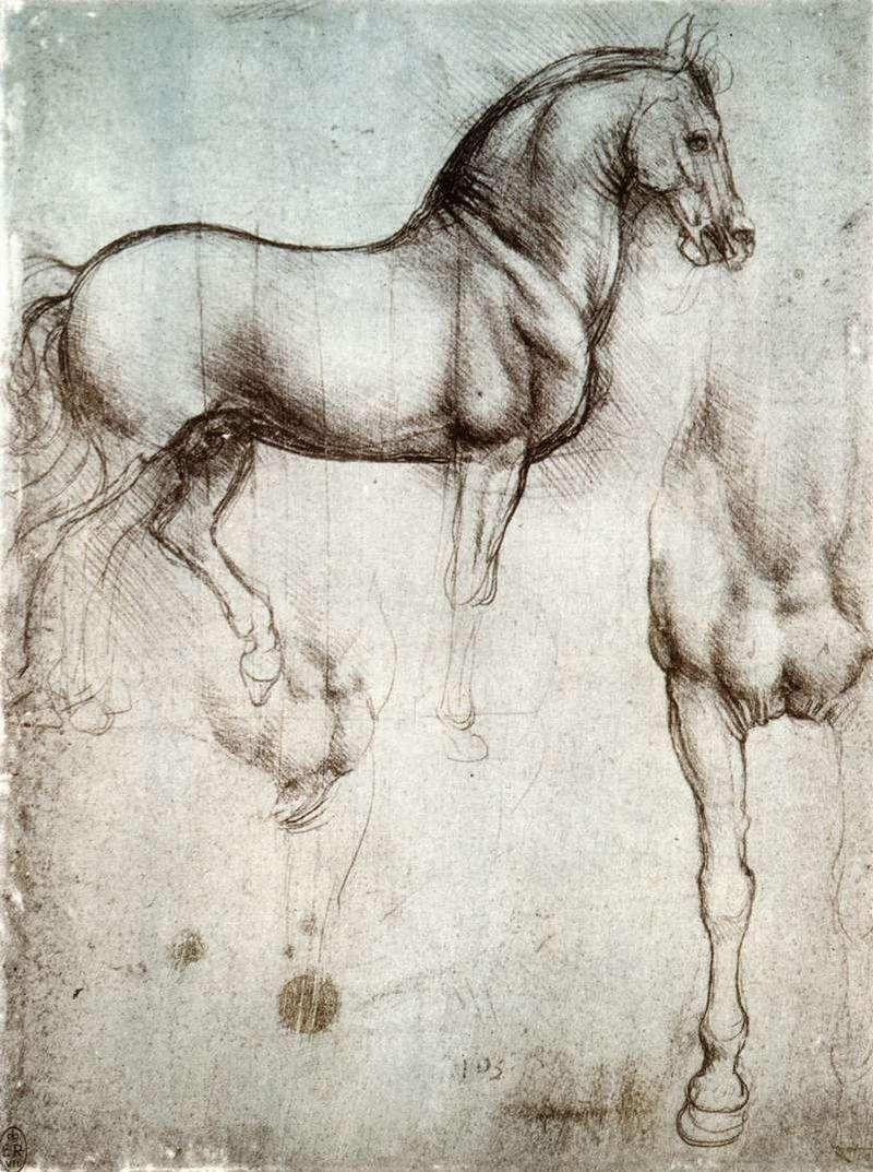 800px-Study_of_horse