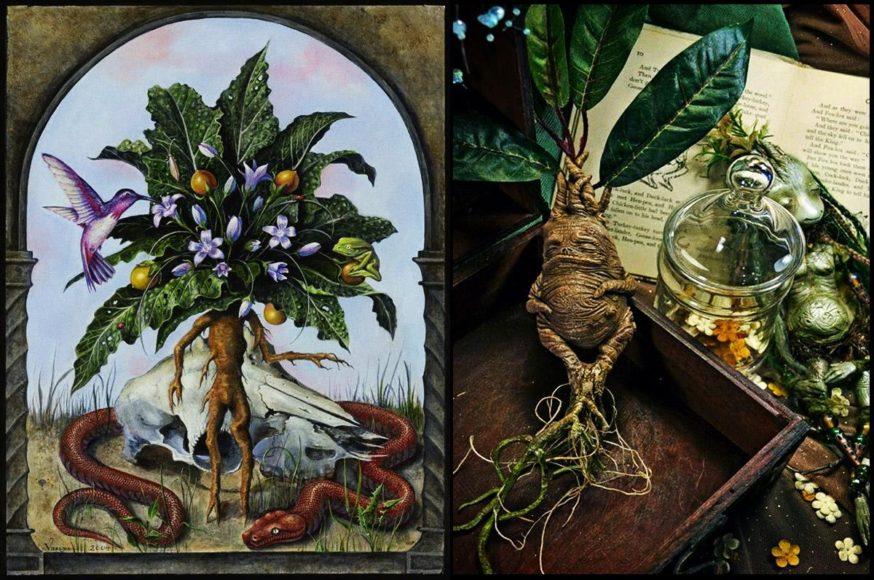 Επικίνδυνα Φυτά και Βότανα