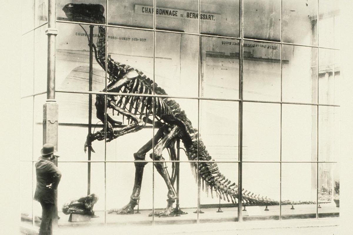 Dino_high_19_EN
