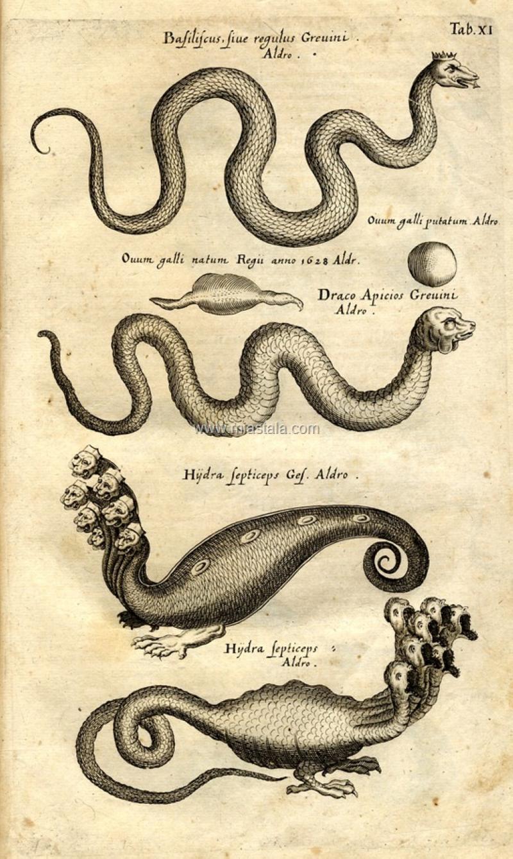 terrapapers.com-Serpentibus και Draconibus 1653 -Ph.D. Joannes Jonstonus (12)