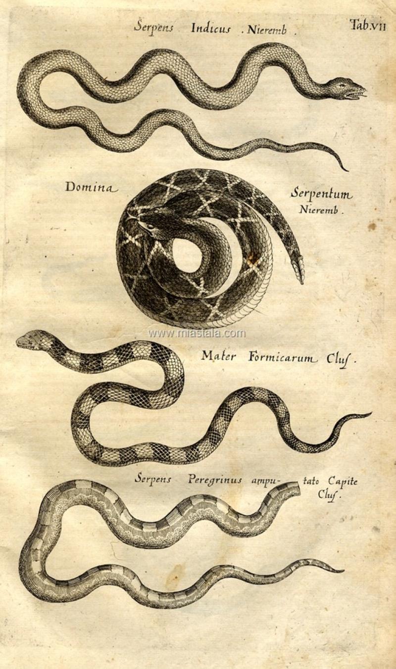 terrapapers.com-Serpentibus και Draconibus 1653 -Ph.D. Joannes Jonstonus (8)