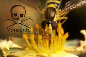 Monsanto και Bayer Δολοφονούν τις Μέλισσες!