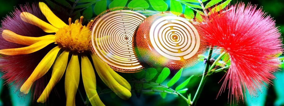 Οργόνη & Ηθολογία Φυτών