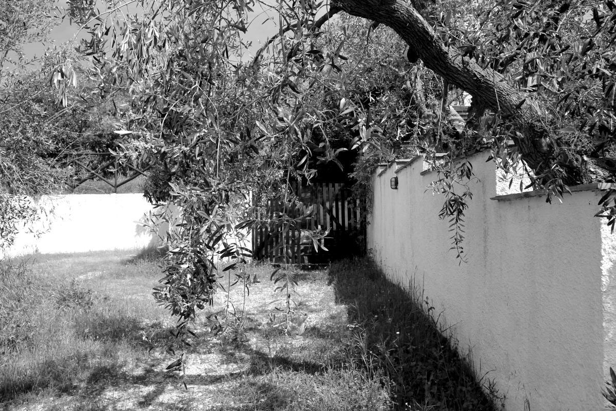 Ελλάδα 2024: Τέλος στο Παρθένο Ελαιόλαδο - Εικόνα2