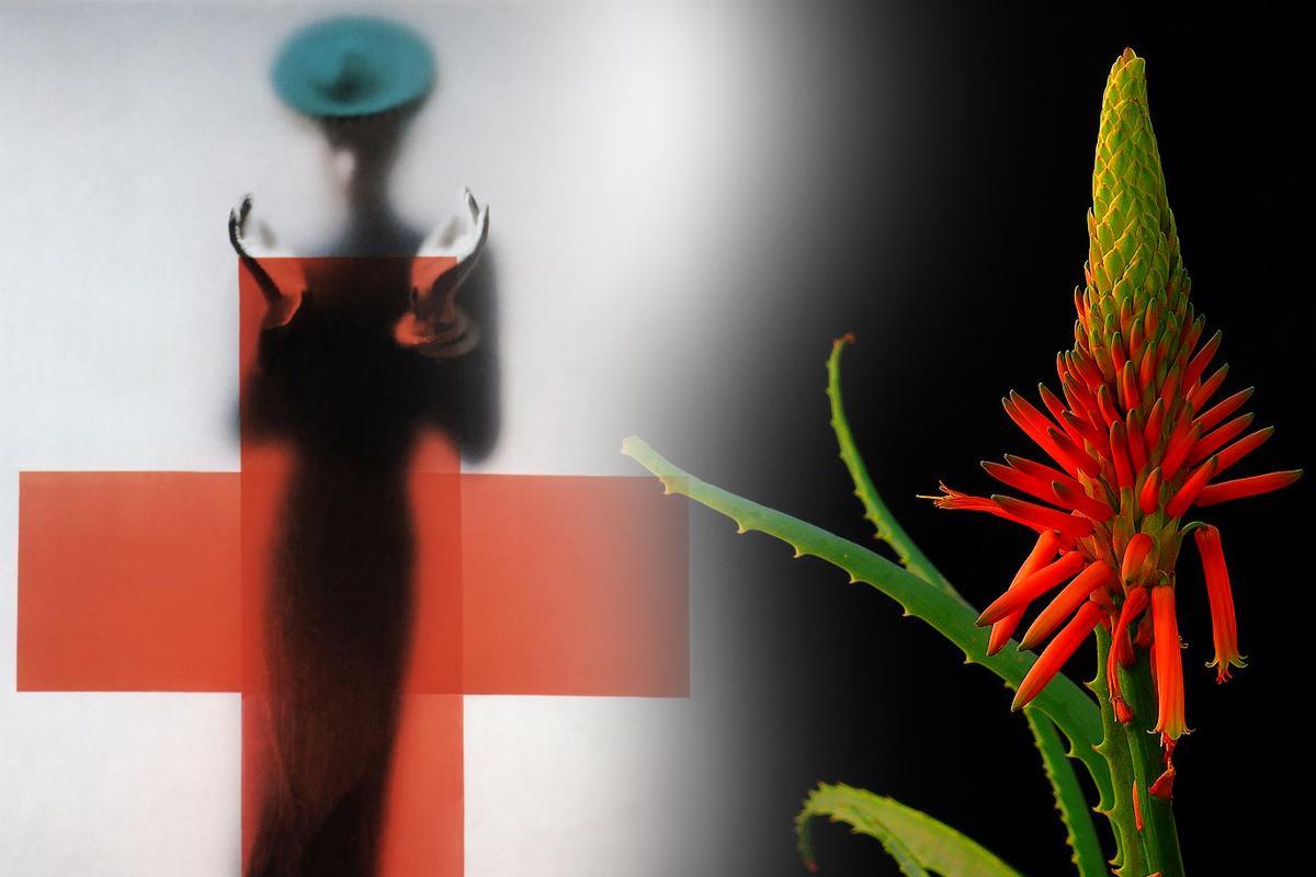 Aloe Arborescens - azione anticancro