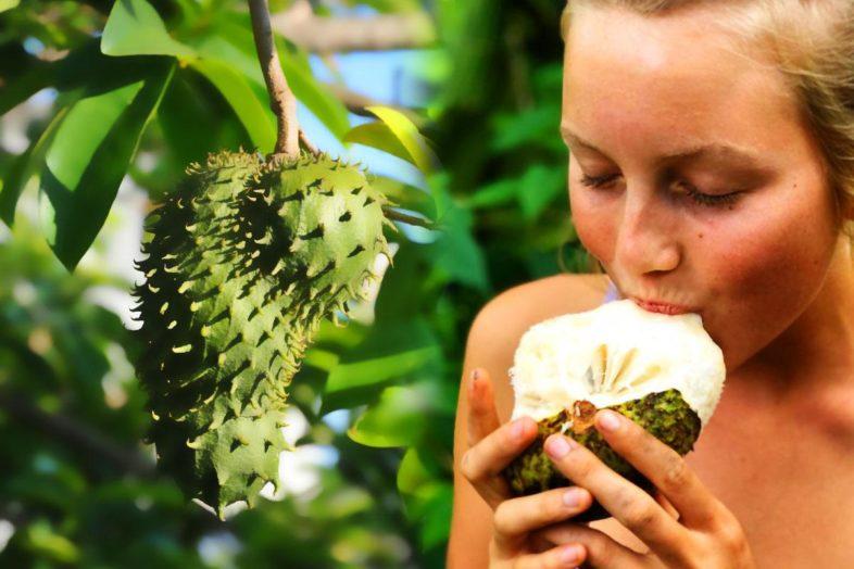 Graviola: Μια αντικαρκινική υπερτροφή