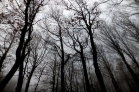 Τα Μαγικά Δέντρα
